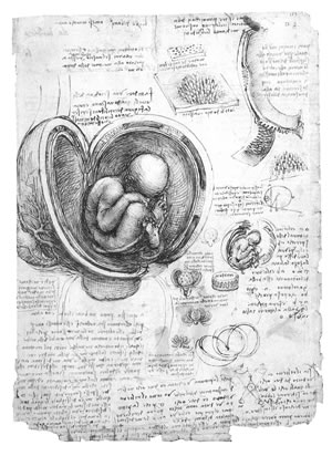 Leonardo da Vinci, THE FETUS AND LININGS OF THE UTERUS