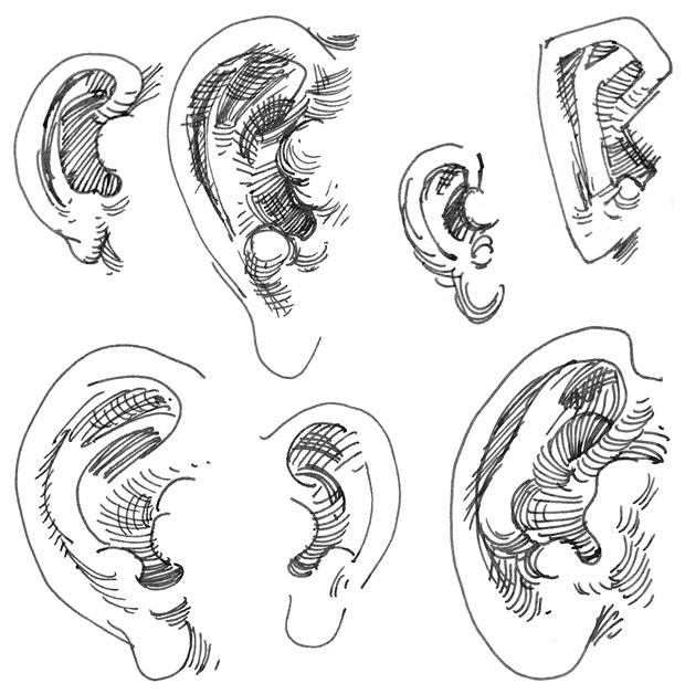 A collage of drawings of the ear