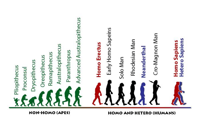 Homo-sapiens-hetero-sapiens